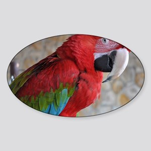 Green Wing Macaw Sticker (Oval)