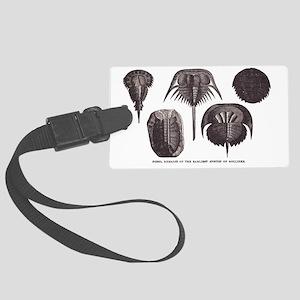 Trilobites Large Luggage Tag