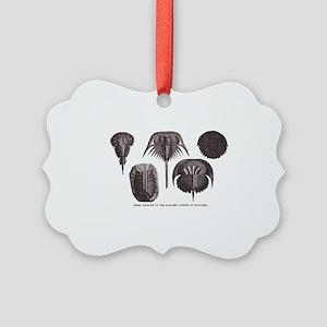 Trilobites Picture Ornament