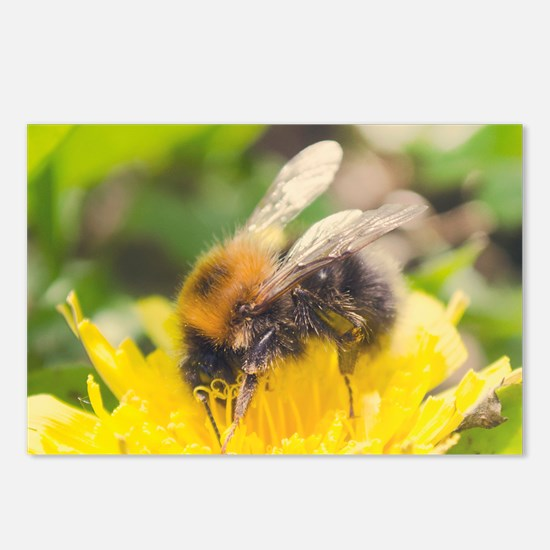 Macro Fuzzy Buzzy Bee Postcards (Package of 8)
