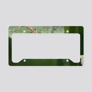 Milkweed Beetle License Plate Holder