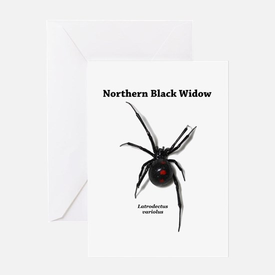 Northern Black Widow with text Greeting Cards