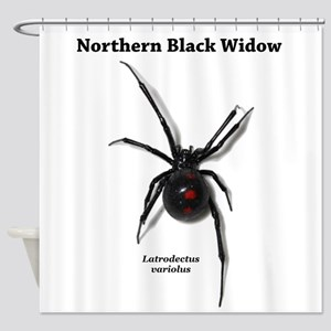 Northern Black Widow with text Shower Curtain