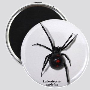 Northern Black Widow with text Magnets
