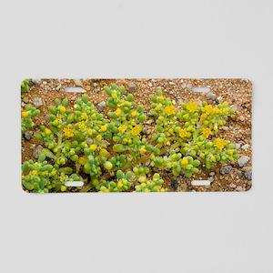Zygophyllum plant (Zygophyl Aluminum License Plate
