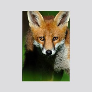 Young red fox Rectangle Magnet