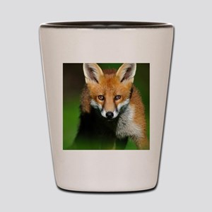 Young red fox Shot Glass
