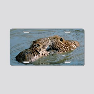 Young coypus playing Aluminum License Plate