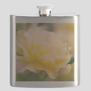 Yellow rose (Rosa hybrid) Flask