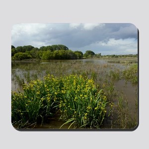 Yellow iris (Iris pseudacorus) in wetlan Mousepad