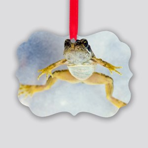 Young frog at 12 weeks Picture Ornament