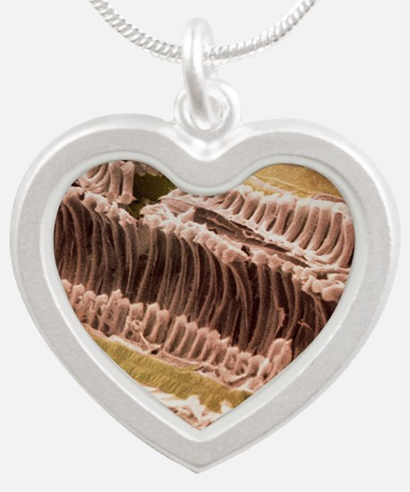 Xylem and parenchyma in Rhub Silver Heart Necklace