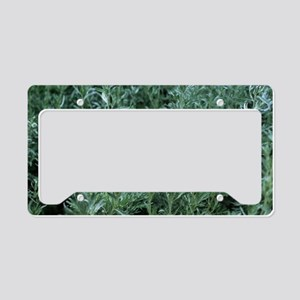 Wormwood (Artemisia absinthiu License Plate Holder