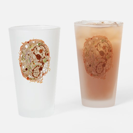 White blood cell, TEM Drinking Glass