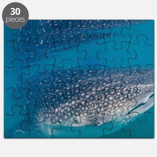 Whale shark Puzzle