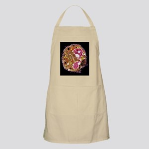 White blood cell, TEM Apron