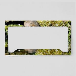 Water vole License Plate Holder