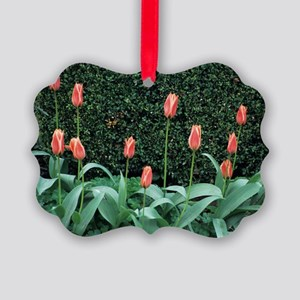 Waterlily tulips Picture Ornament