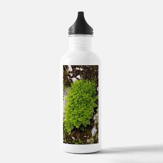 Wall-rue (Asplenium ru Water Bottle