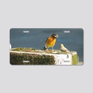 Cut Black Headed Grosbeak Aluminum License Plate