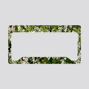 Vicia villosa ssp maniatissa License Plate Holder