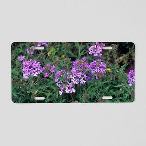 Verbena 'Loveliness' Aluminum License Plate