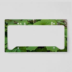 Vanilla leaf (Achlys triphyll License Plate Holder