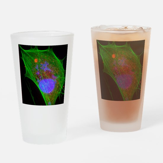 Vaccinia virus infected cell Drinking Glass