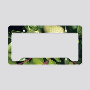 Unripened strawberries License Plate Holder