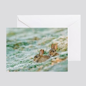 Two young Rabbits Greeting Card