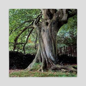 Twisted beech tree (Fagus sp.) Queen Duvet