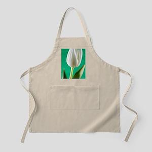 Tulip (Tulipa sp.) Apron
