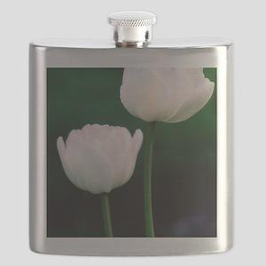 Tulips (Tulipa hybrid) Flask