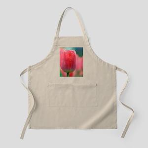 Tulip (Tulipa 'Judith Leyster') Apron