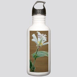 Toad lily flower Stainless Water Bottle 1.0L