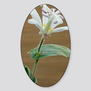 Toad lily flower Sticker (Oval)