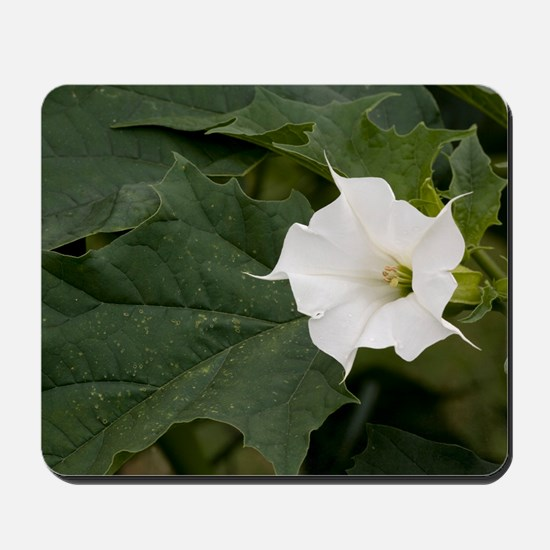 Thorn Apple (Datura stramonium) Mousepad