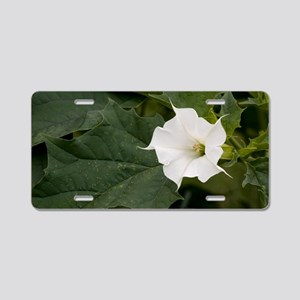 Thorn Apple (Datura stramon Aluminum License Plate