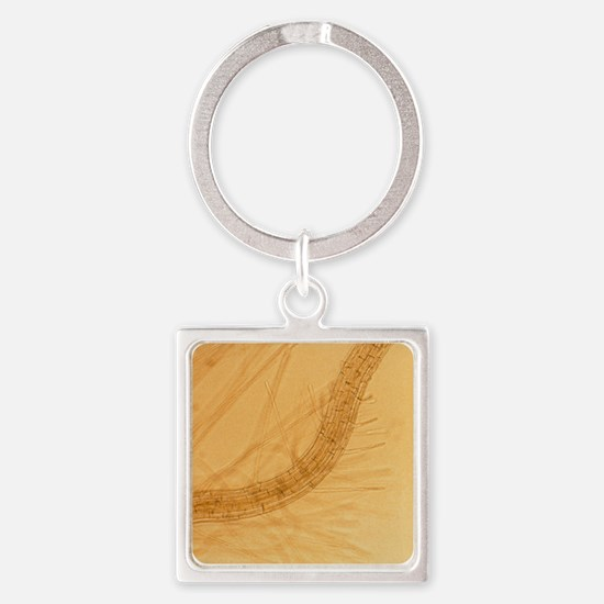 Thale cress root with root hairs Square Keychain