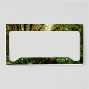 Temperate rainforest License Plate Holder