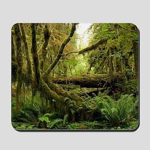 Temperate rainforest Mousepad