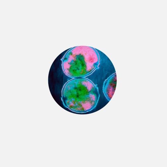 TEM of Streptococcus pneumoniae bacter Mini Button