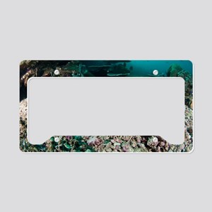 Tassled wobbegong License Plate Holder