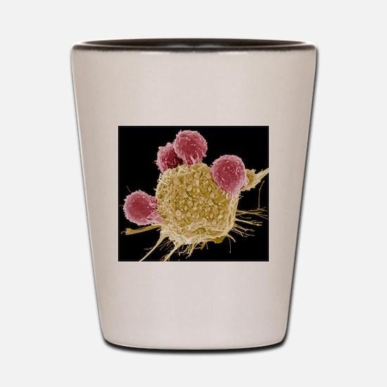 T lymphocytes and cancer cell, SEM Shot Glass