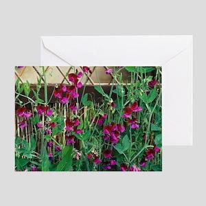 Sweet Pea flowers Greeting Card