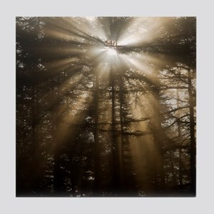 Sunlight through pine trees Tile Coaster