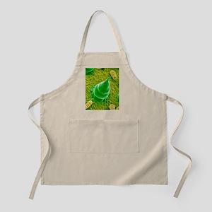 Sunflower leaf, SEM Apron