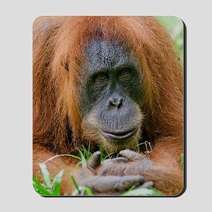 Sumatran orangutan Mousepad