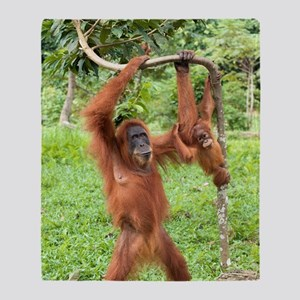Sumatran orangutans Throw Blanket