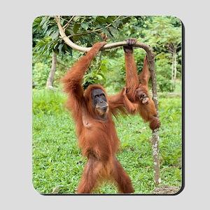 Sumatran orangutans Mousepad